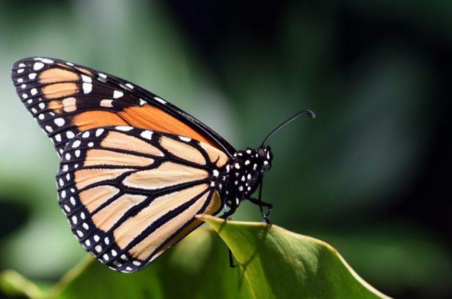 Farfalle di carta: come realizzarle con i nostri bambini