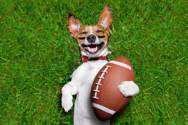 giochi-per-cani