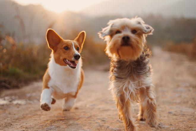 Cani da compagnia: ecco come combattere la solitudine